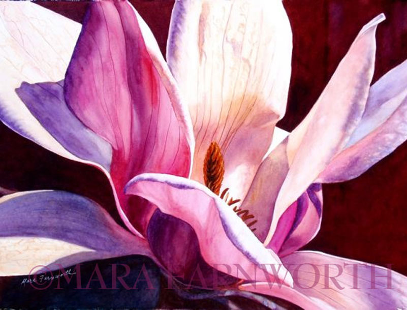 Tulip Magnolia by Mara Farnworth
